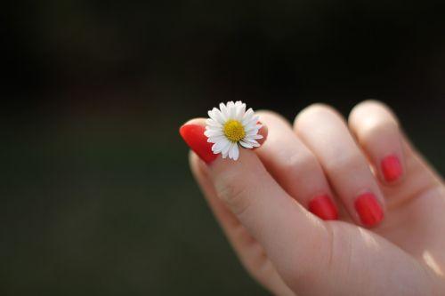 hand daisy flower