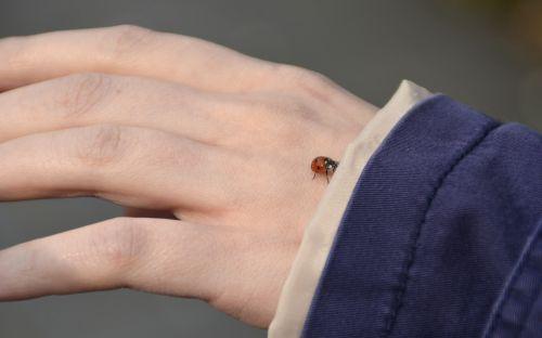 hand ladybug nature
