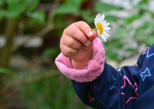 hand  child's hand  marguerite
