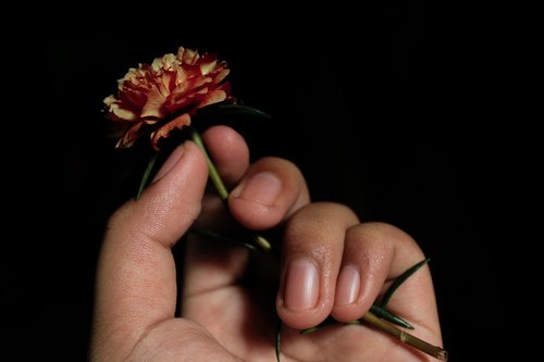 hand  flowers  hold