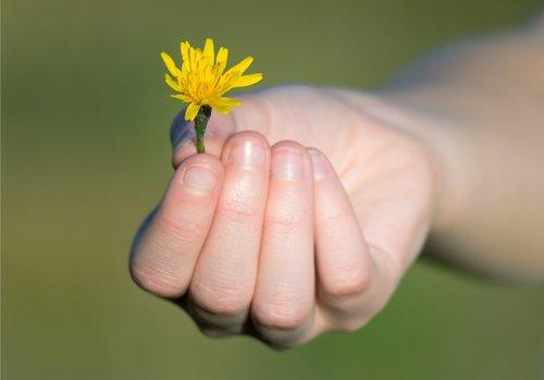 hand  gift  flower