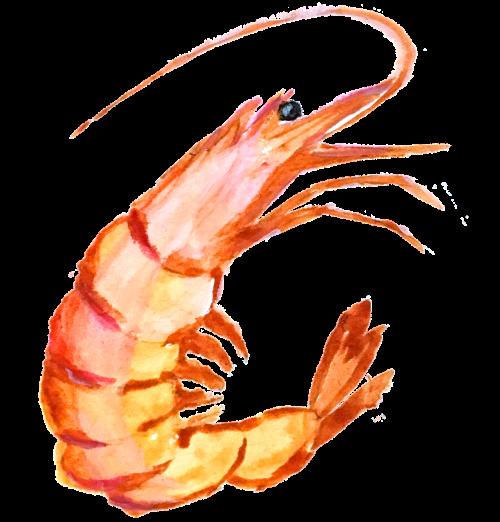 rankų tapyba,nutapyti paveikslą,krevetės,krevečių paveikslas