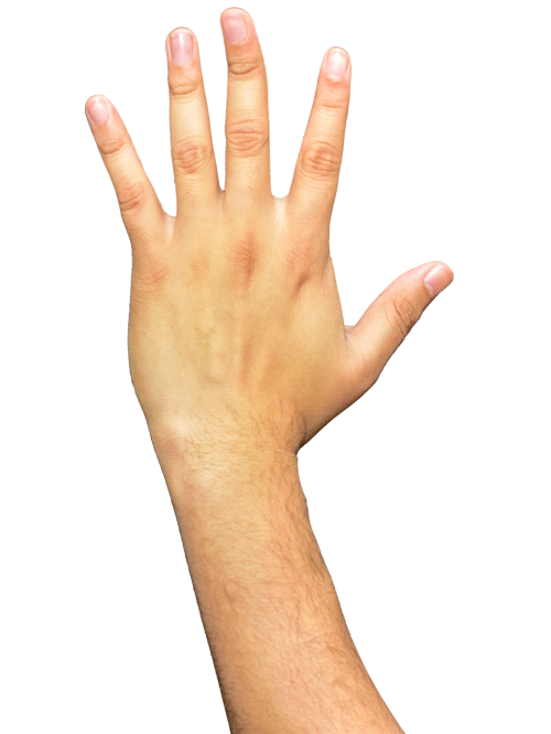 hands fingers arm