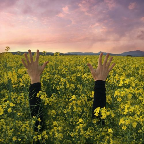hands sunset flowers