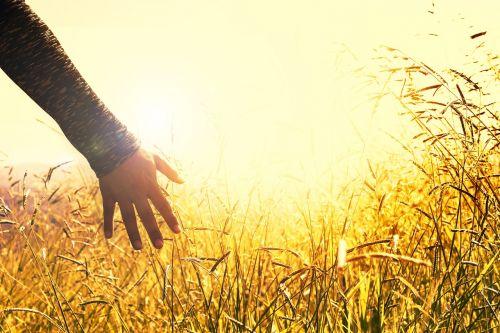 hands grass peace