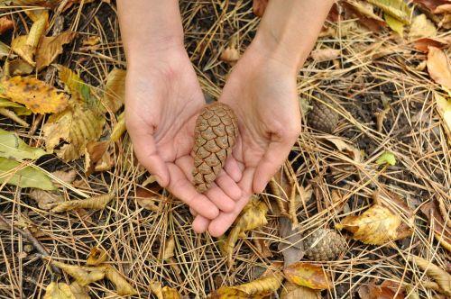 hands bump autumn
