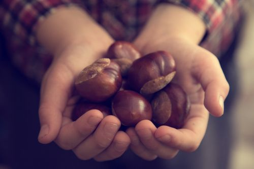 Hands Full Of Chestnuts