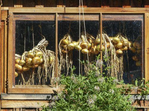 hanging onions window