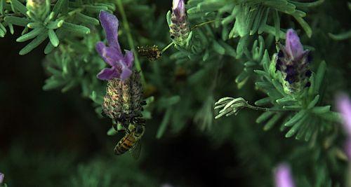 Hanging Bee