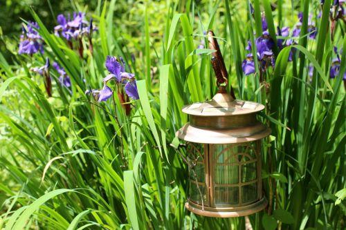 žibintas, varis & nbsp, žibintas, sodas & nbsp, šviesa, pakabintas & nbsp, žibintas, šviesus, gėlės, sodas & nbsp, ornamentas, kabantis žibintas