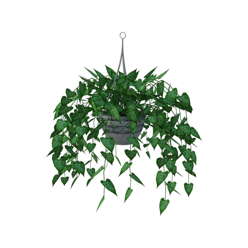 hanging plant  leaves  planter