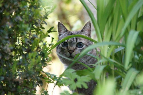 cat animal garden