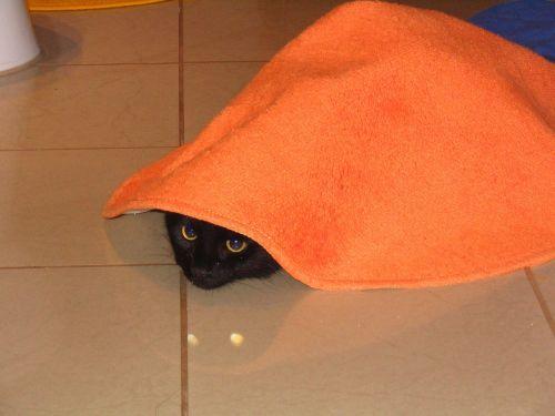 cat carpet hiding place