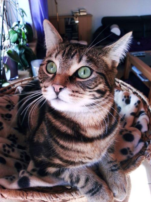 cat mysterious eyes cute