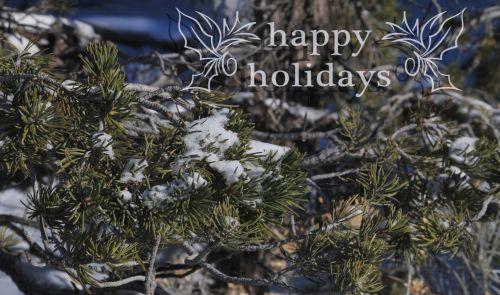 Happy Holidays Snowy Pine Branch