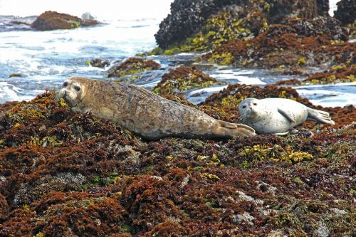 harbor harbor seals seal