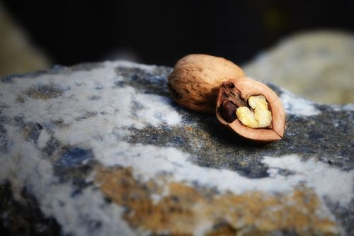 hard shell soft core walnut nut
