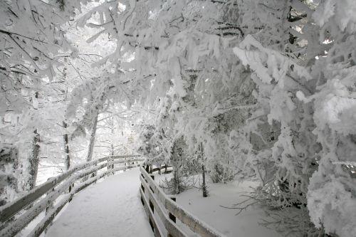 hard rime ice winter trees