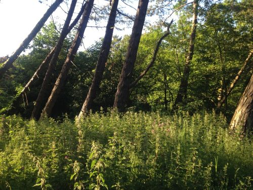hardwood timber green