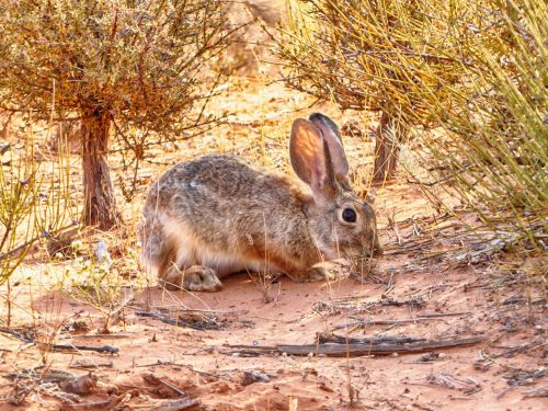 hare arches national park hiking
