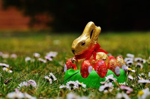 hare easter chocolate