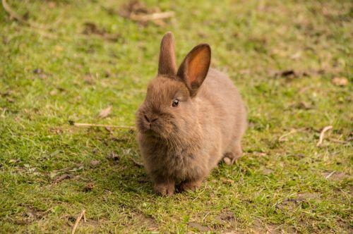 hare rabbit baby