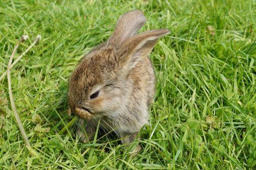 hare rabbit cute