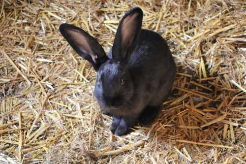 hare rabbit hof