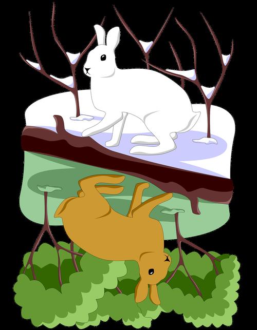 hare  white  summer