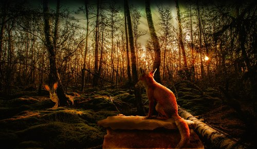 hare  fuchs  forest