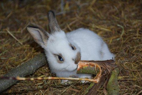 hare  small hare  rabbit