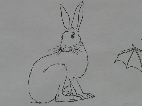 hare animal coloring pages