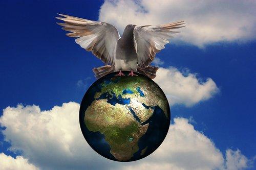 harmony  dove  peace dove