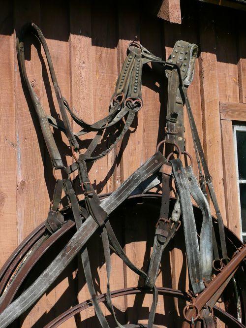 harness steinbach mennonite heritage village