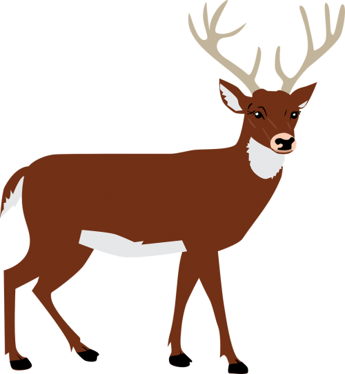 hart,antlers,forest,animal,vector,free vector graphics