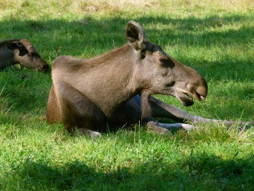 hart animals in the park ähtäri