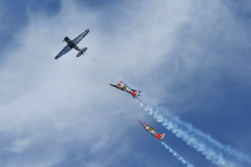 Harvards In A Roll