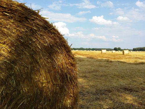 harvest summer field crops