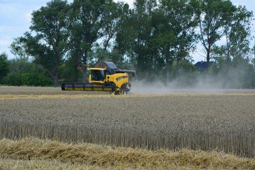 harvest grain harvest agriculture