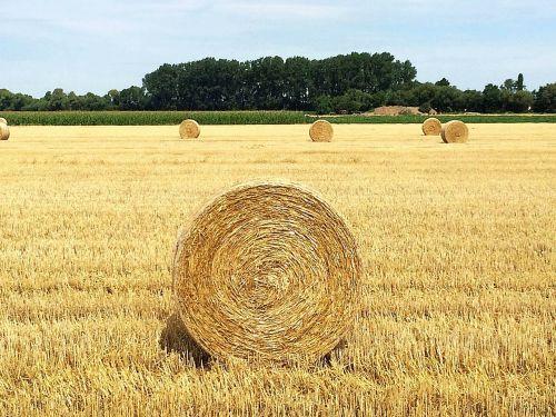straw straw bales round bales