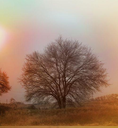harvest tree solitude