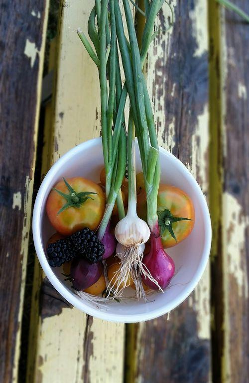 harvest vegetables garden