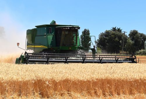 harvest wheat cereal