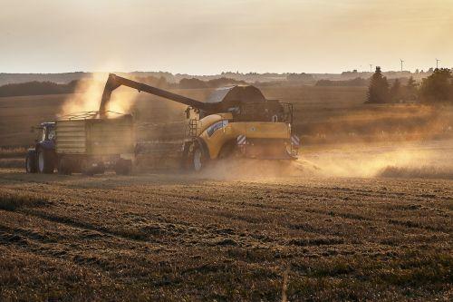 harvest oilseed rape combine harvester