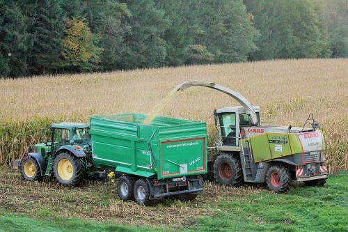 harvest corn autumn