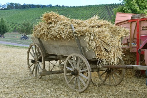 harvest  historically  agriculture