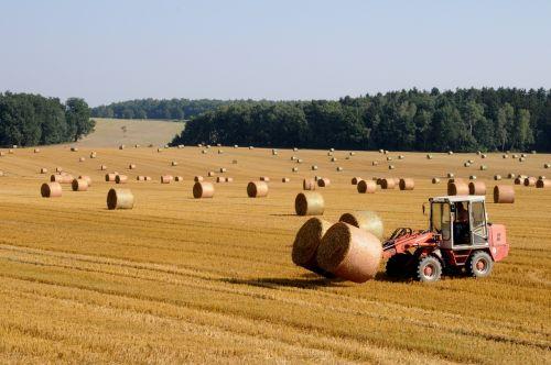 harvest straw straw bales