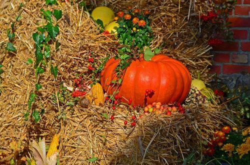 harvest harvest festival pumpkin