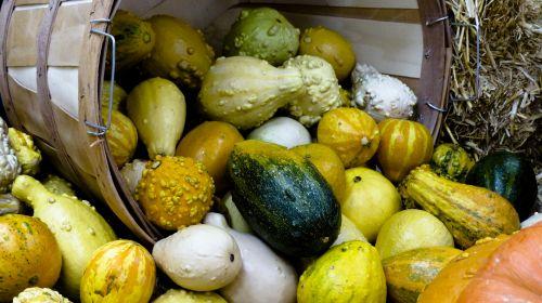Harvest Gourd Cornucopia