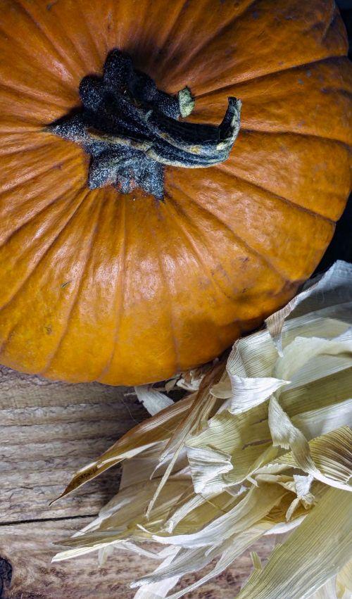 pumpkin,corn,husks,still-life,harvest,thanksgiving,harvest time pumpkin